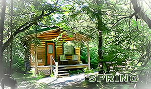 Spring Cabin at Alaska Creekside Cabins in Seward Alaska, Real Alaskan Vacation Cabins